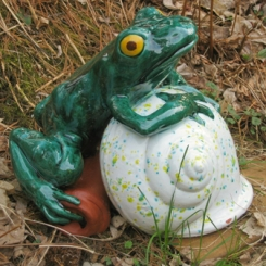 frogs06